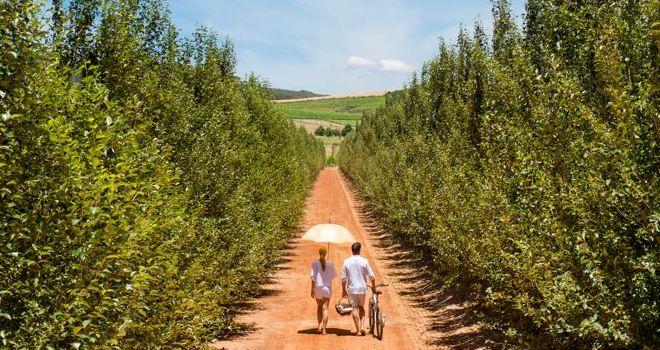 Off for a picnic at Babylonstoren, Cape region, South Africa