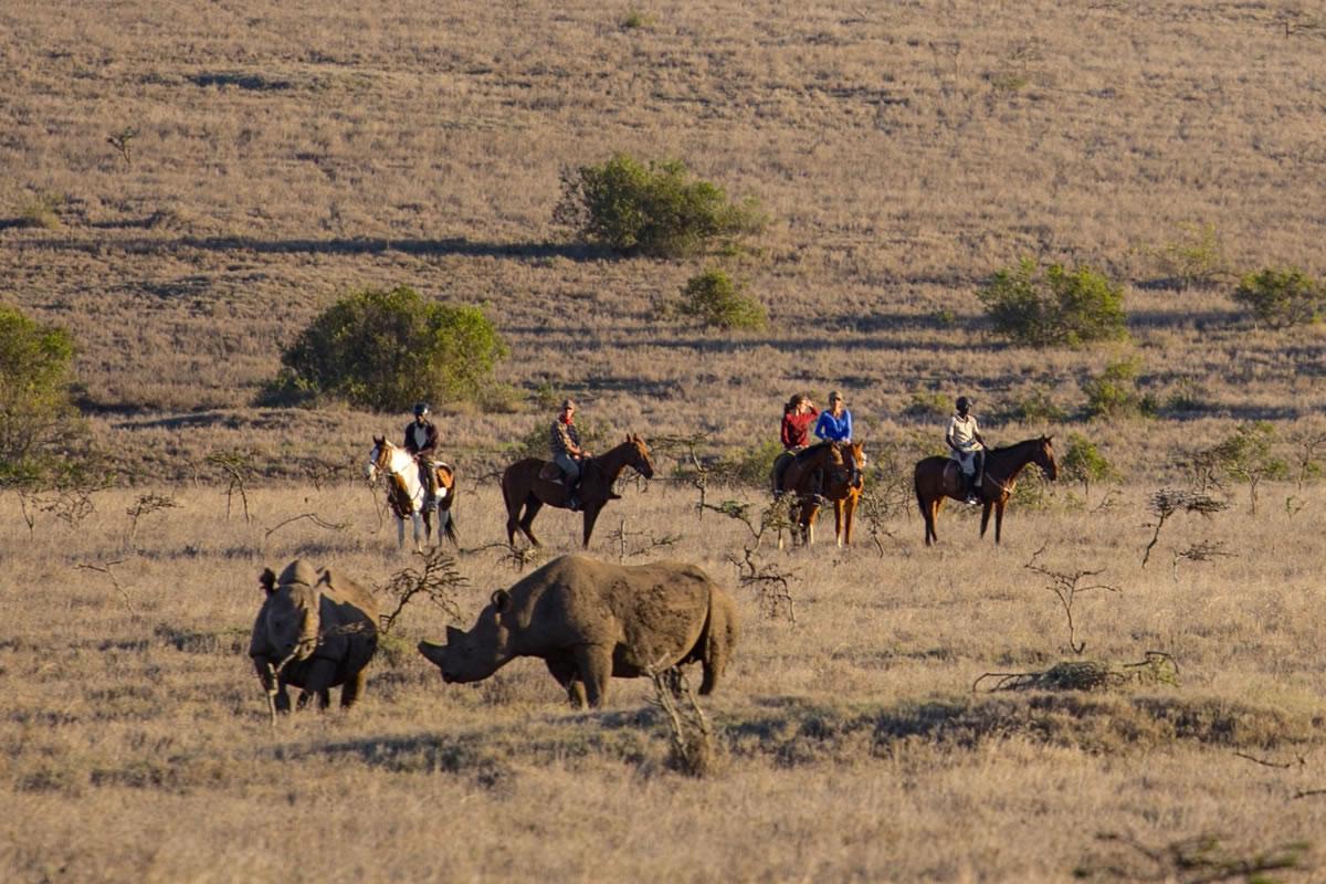 Rhino on safari with Borana riding