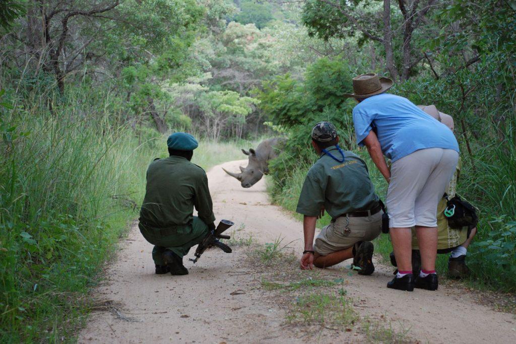 Amalinda Lodge rhino