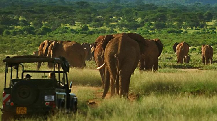 Saba Douglas-Hamilton with elephant with daughter in a safari vehicle with two elephants behind