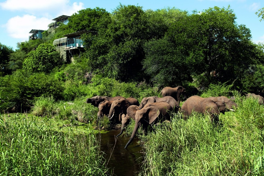Elephant-at-the-waterhole-Singita-Lebombo-Kruger-South-Africa-1024x683