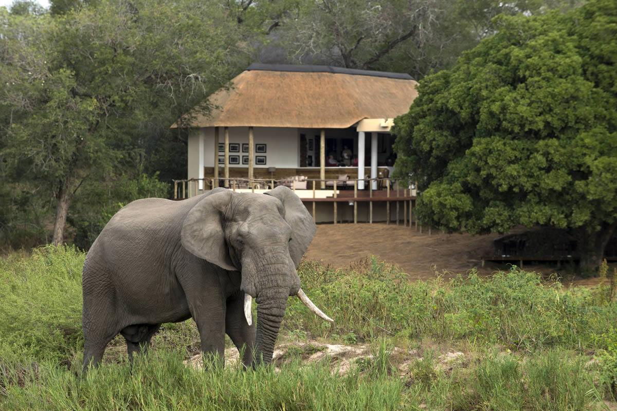 Exeter River Lodge Sabi Sands Reserve Kruger National Park