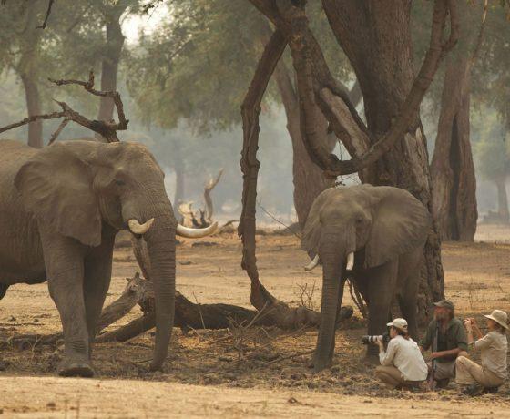 Private Walking Safaris