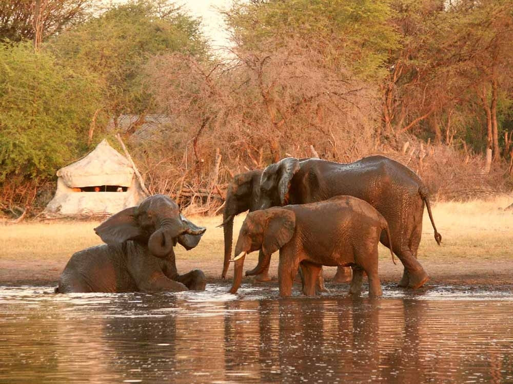 Hide-pic-1-Eles-in-from-of-the-Underground-Hide-Hwange-Zimbabwe