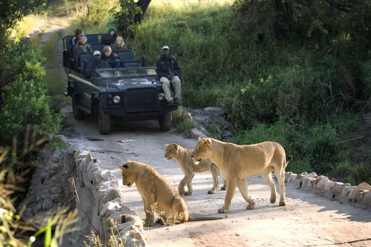 Viewing lions by vehicle in the Sabi Sands