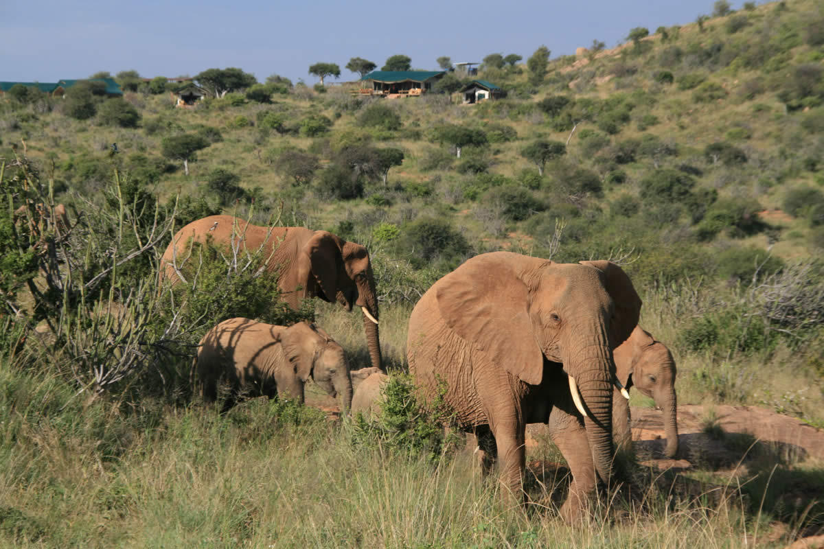 Laikipia Wilderness elephants