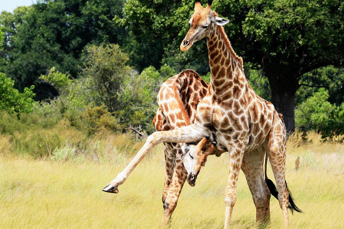 Dream safari Botswana
