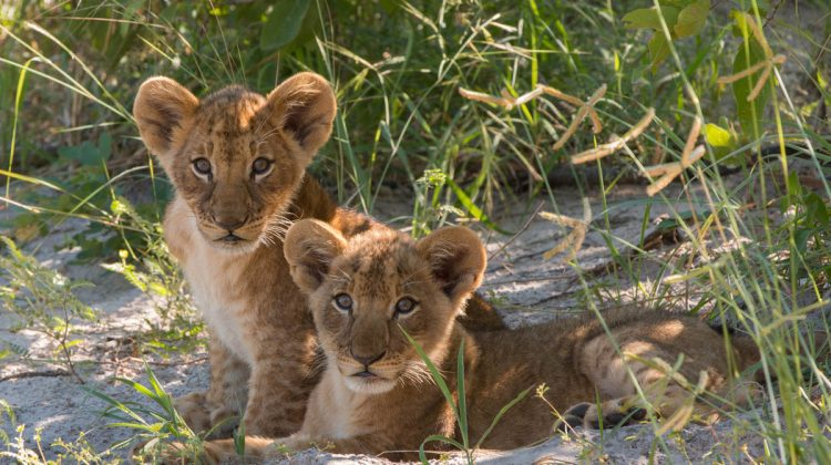 Kwando Camps, Botswana – Spring Special