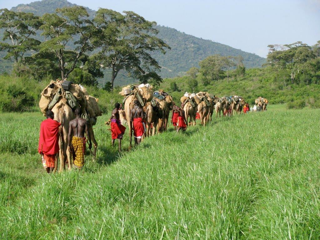 Left-field-camels-Kenya-Karisia-1-1024x768