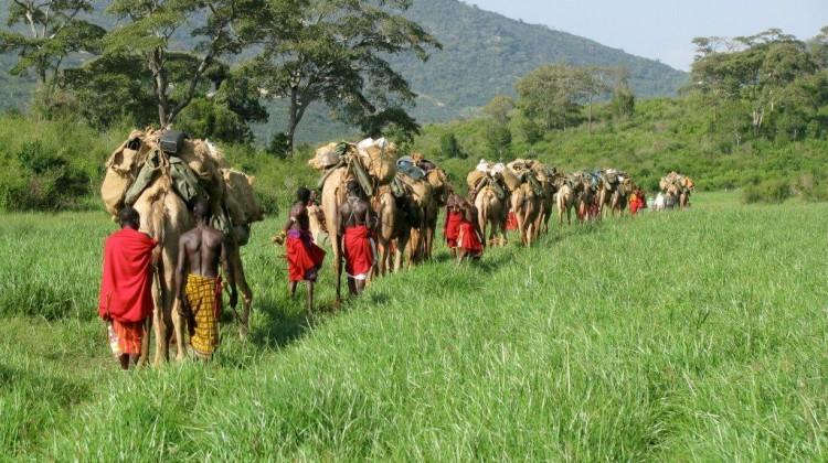 Karisia walking safaris -camel train