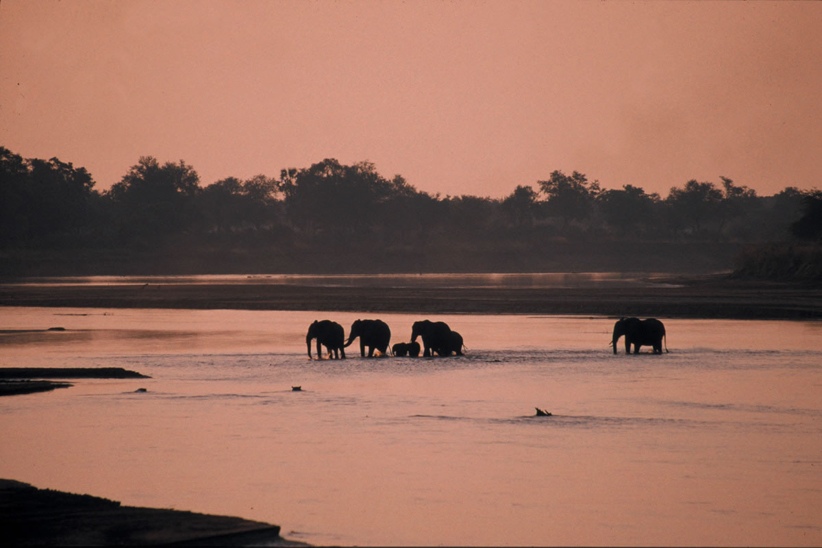 Elephants in the river, Luangwa Bush Camp