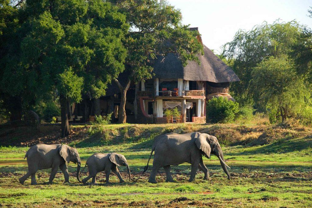 Luangwa safari house, elephants walking past the lodge
