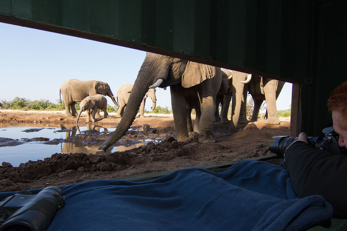Elephants and photographer at the C4 Images hide at Mashatu waterhole