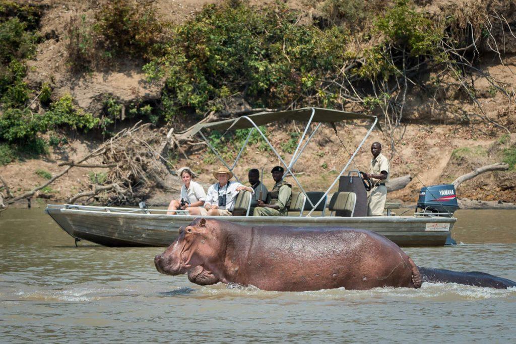 Nsefu, river safari viewing hippo