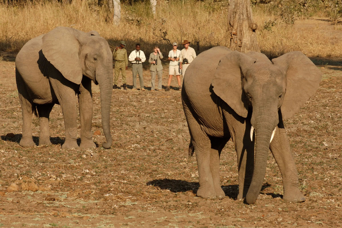 Nsolo bushcamp walking safaris with elephants