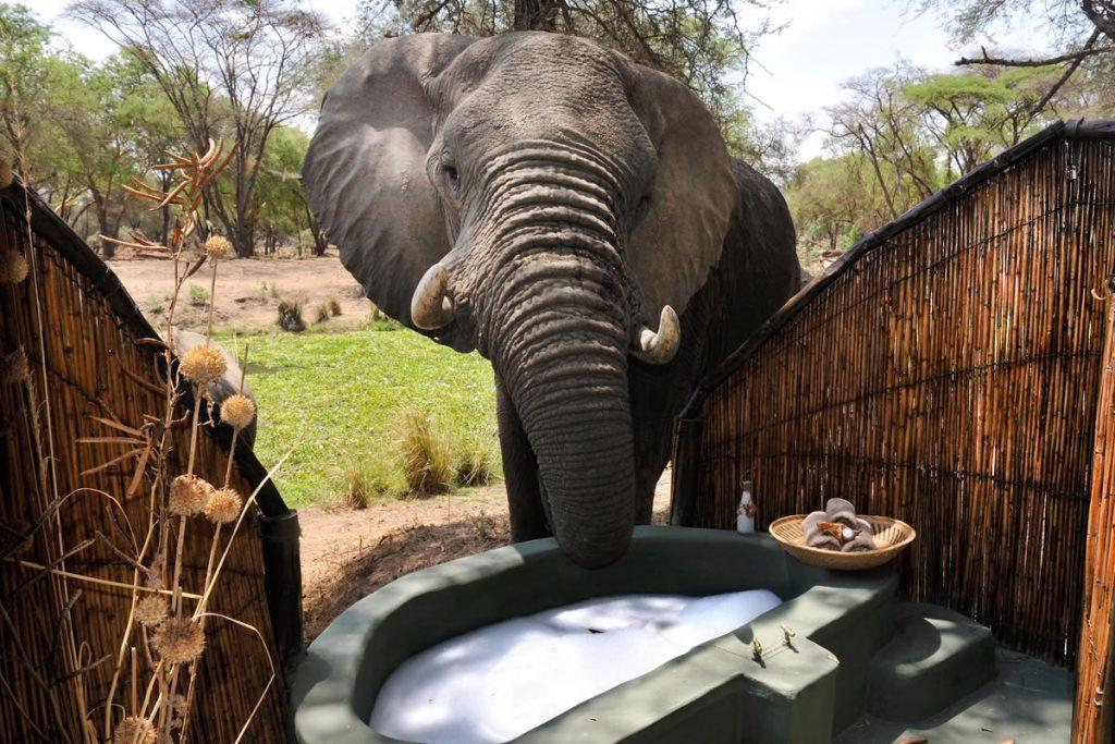 Old Mondoro bathroom with elephant