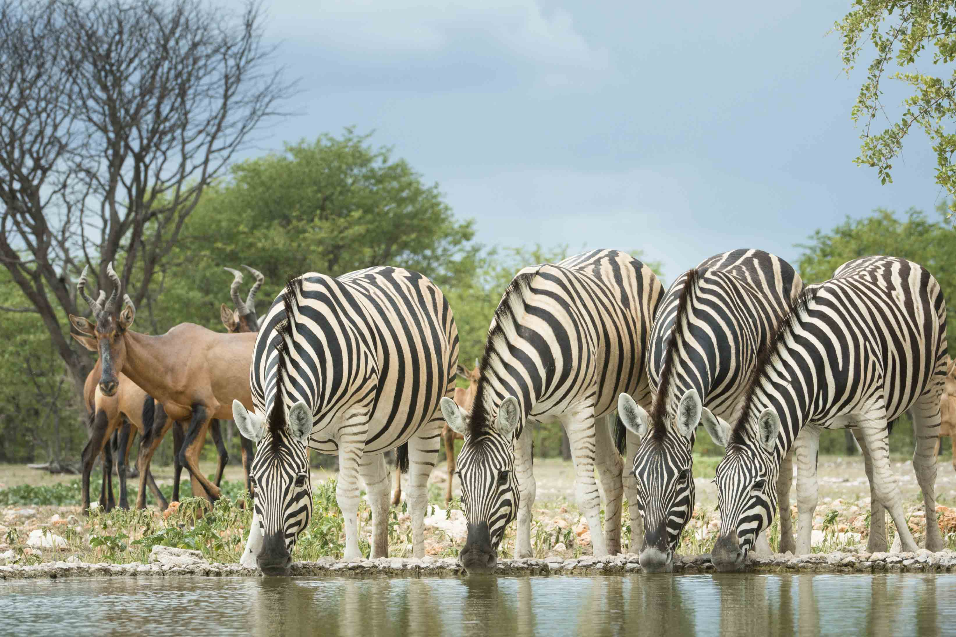 Dream safaris in Namibia