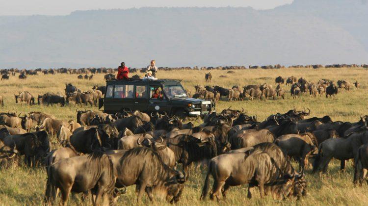 Rekero Camp Wildebeest Masai Mara Kenya
