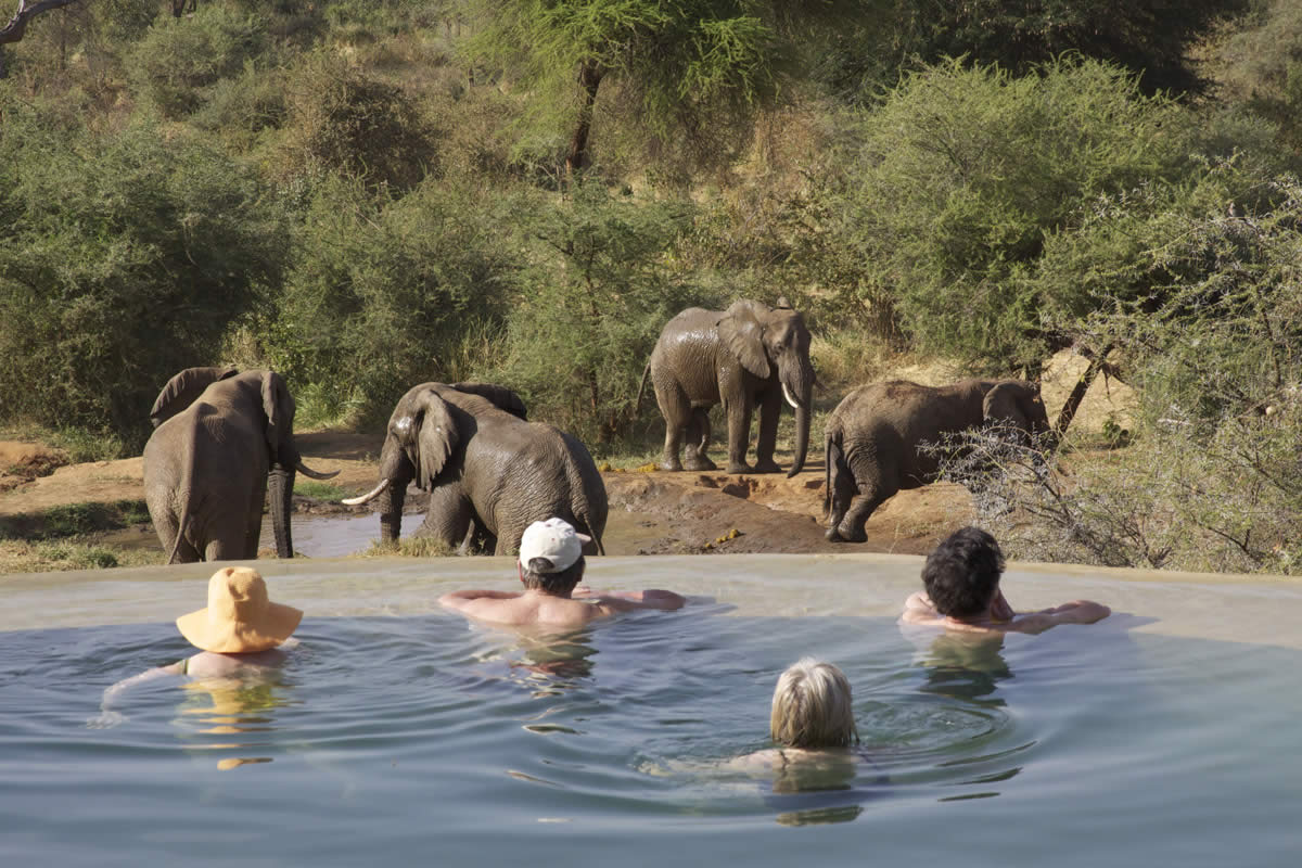 Elephants at Sarara Camp, guests overlooking them in the pool