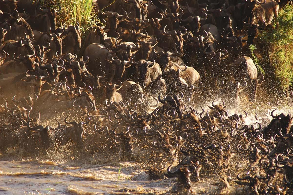 Sayari-wildebeest-crossing