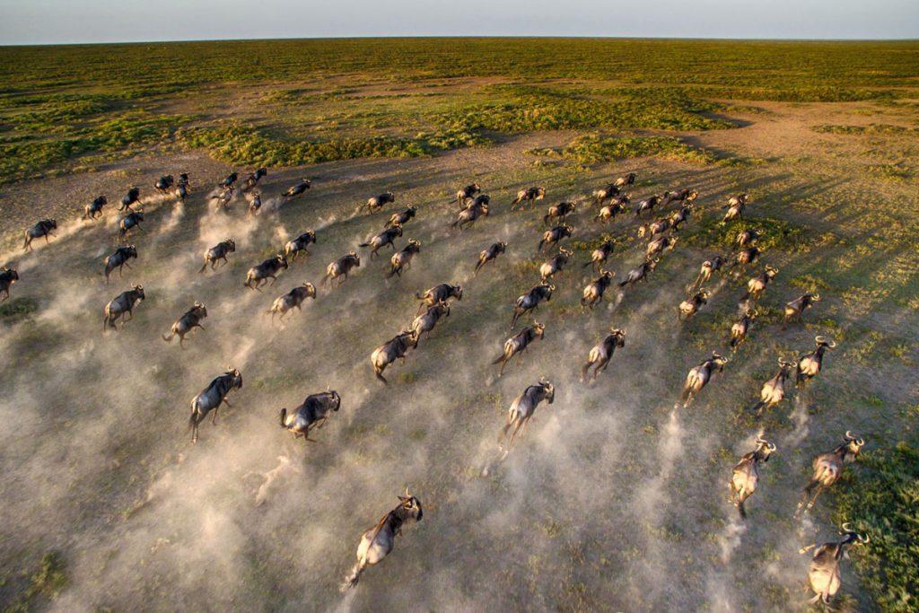 Serengeti Under Canvas aerial wildebeest migration AndBeyond
