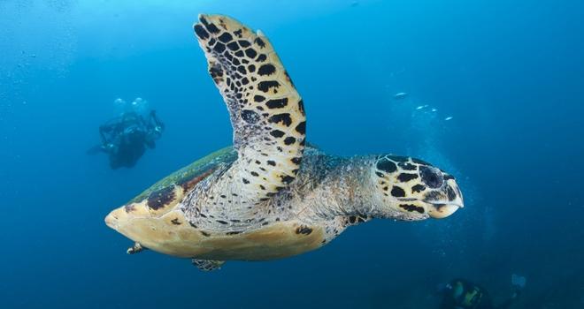 Diving with turtles at Rocktail, KwaZulu-Natal coast