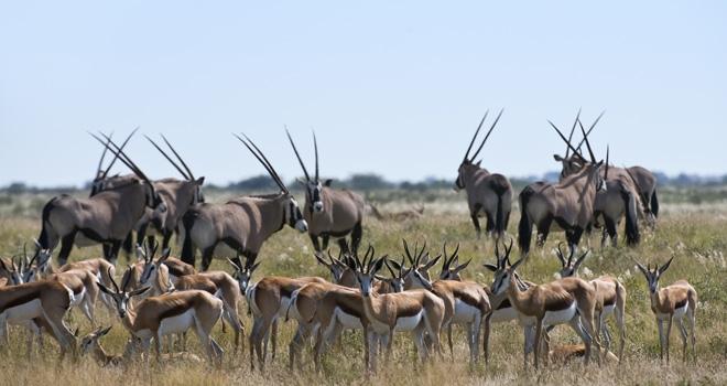 The Kalahari
