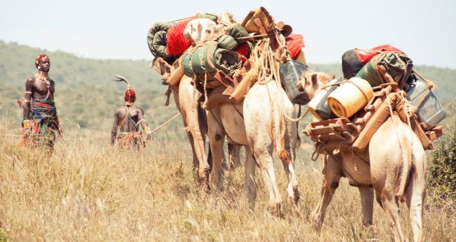 Ol Malo nomad camels Kenyan safari