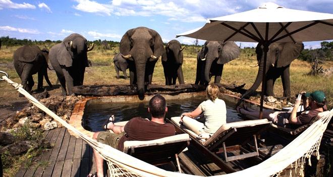 slider_somalisa_elephant.jpg