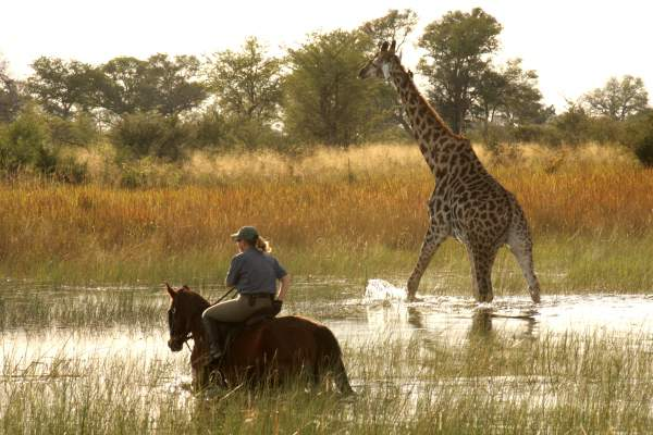 Barney Bestelink riding with a giraffe in the Okavango