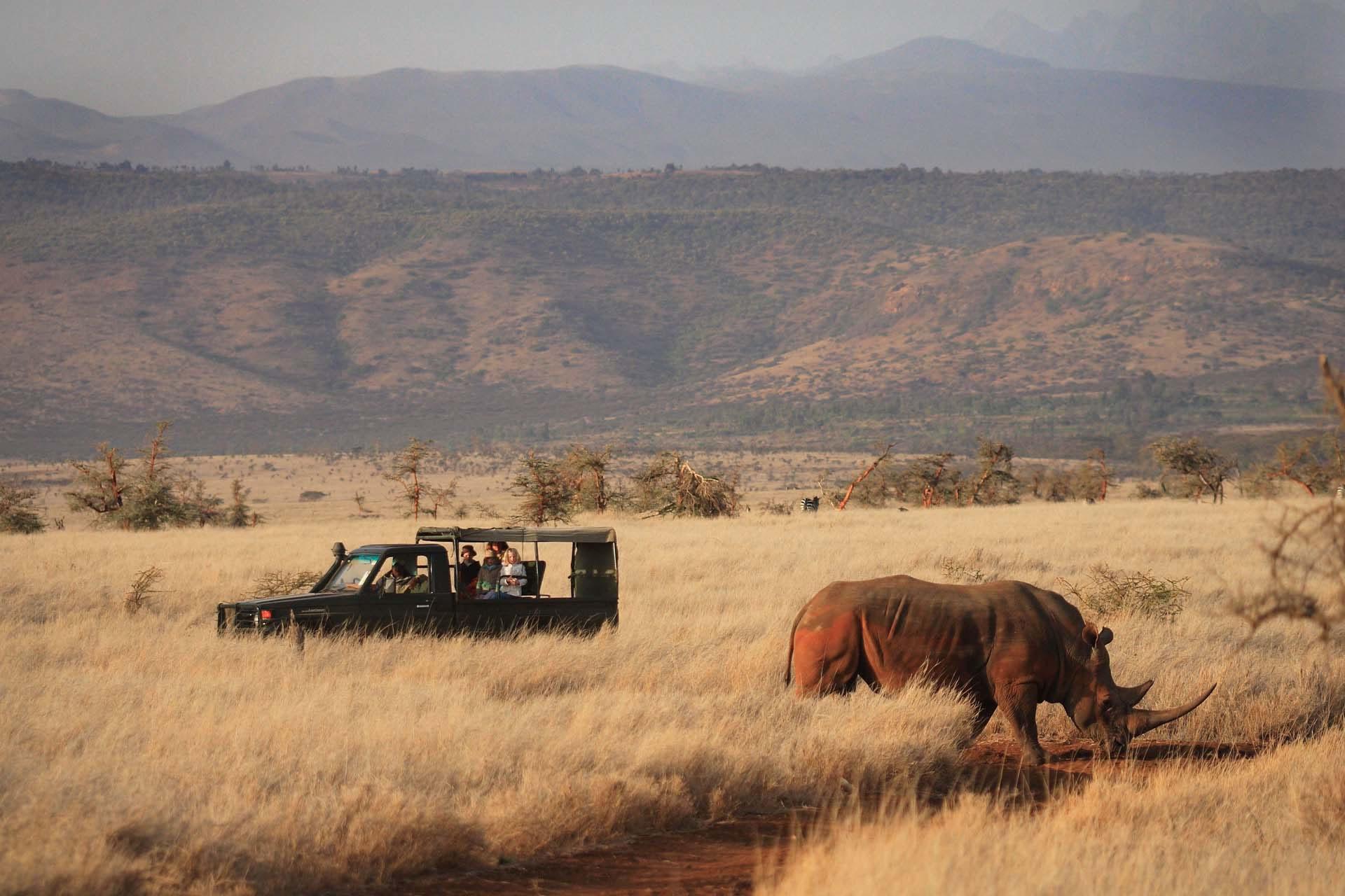 Rhino on a game drive at Lewa House