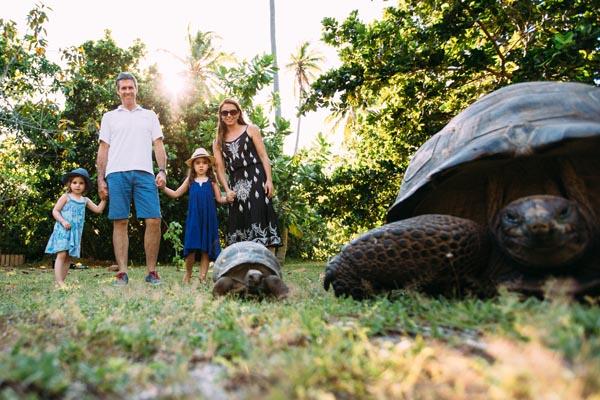 North Island, Seychelles, giant tortoise