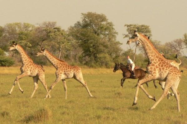 Okavango Horse Safaris, Botswana