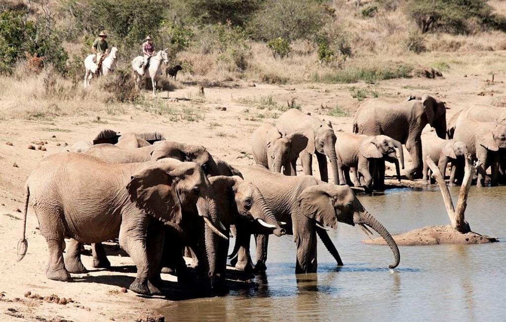 Ol-Malo-elephants-1024x651