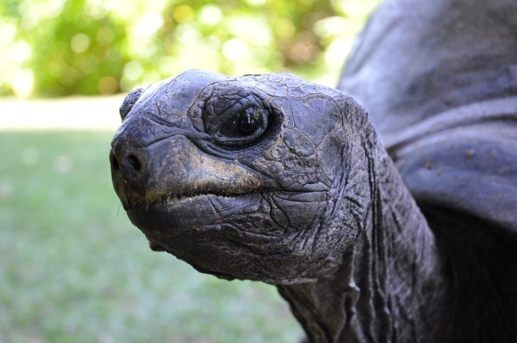 Seychelles-North-Island-Tortoise-1024x680