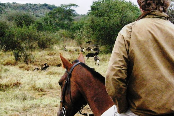 Simon Kenyon Sosian riding safari guide with wild dogs