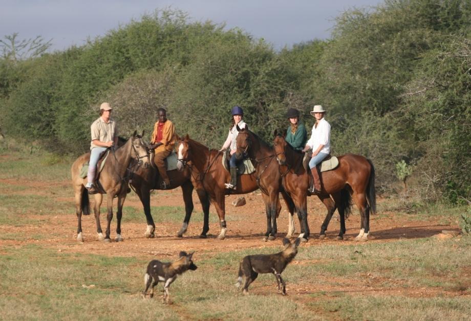 Sosian_Kenya_WildDogs-and-Horses-1-Small