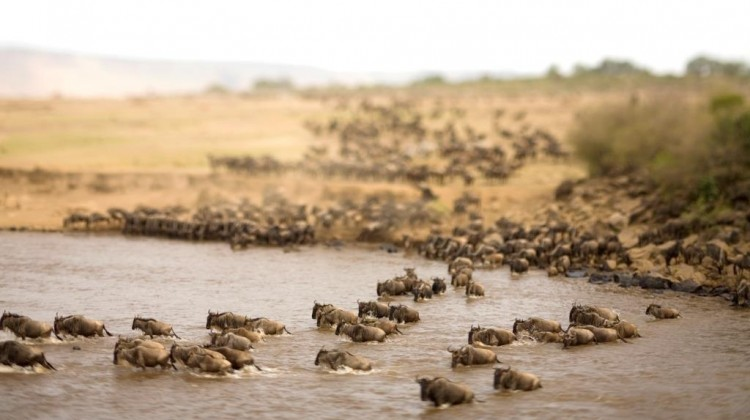 Photographing A Wildebeest Migration 'River Crossing'
