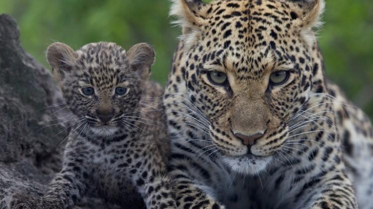 How to photograph animals on safari