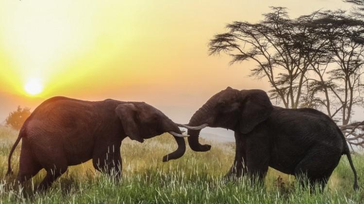 Fabulous Kenyan safari to support the 2017 cricket tour