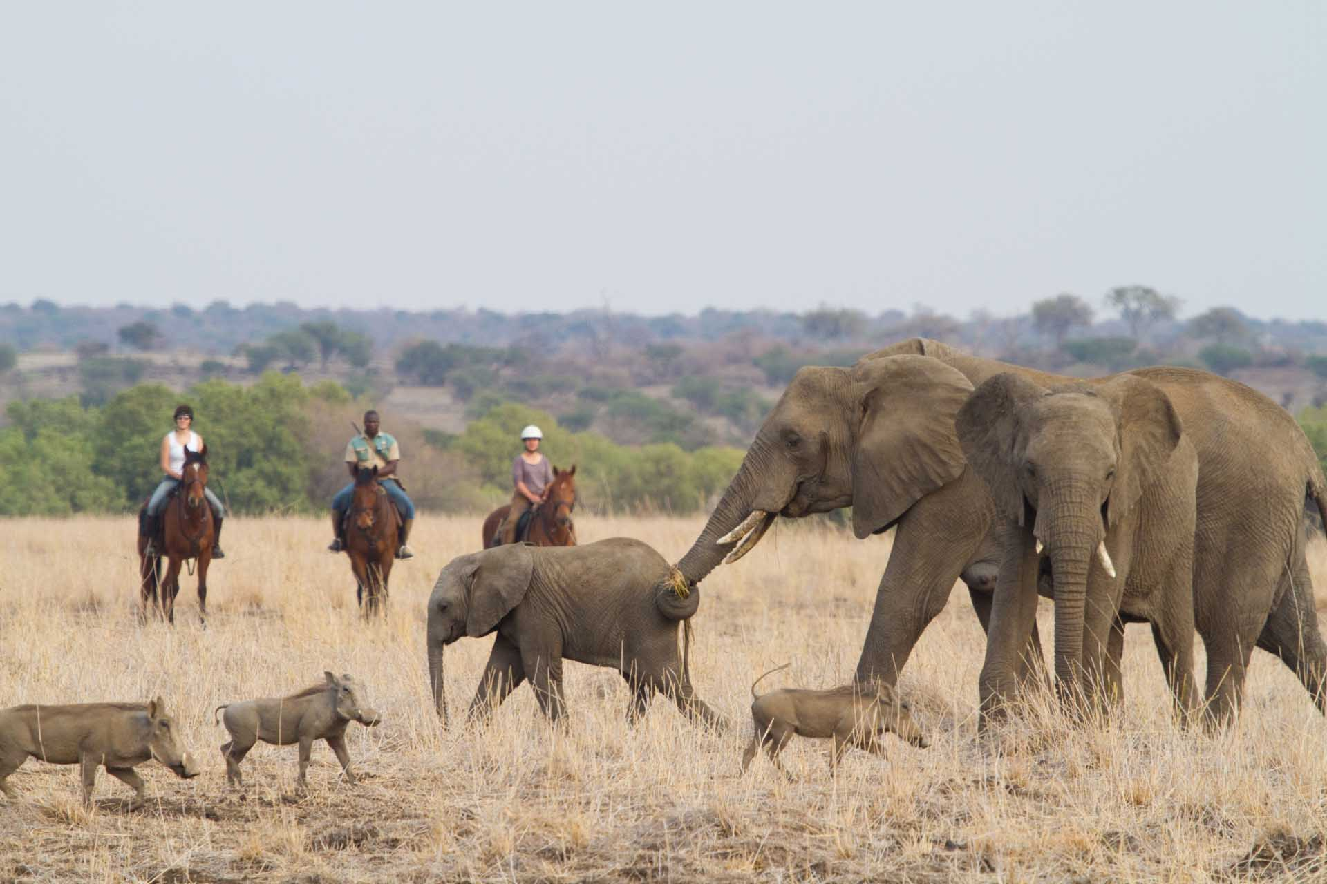 Ride through the vast Mashatu Game Reserve tucked against Botswana's border with South Africa