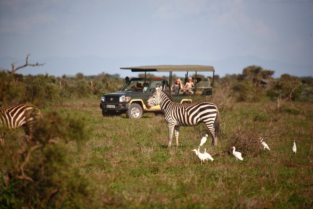 Tortilis Camp - Game Drive - Zebra Amboseli Kenya