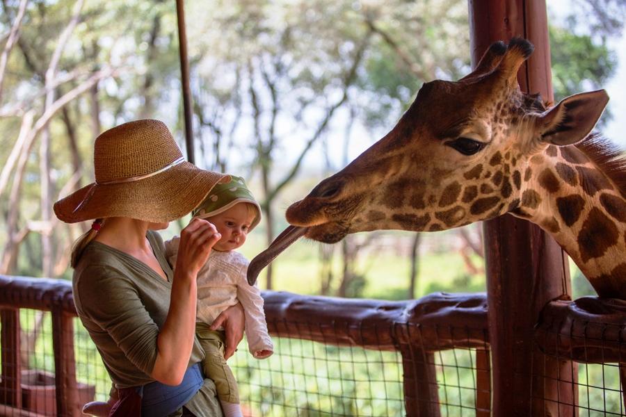 Giraffe Center baby and giraffe