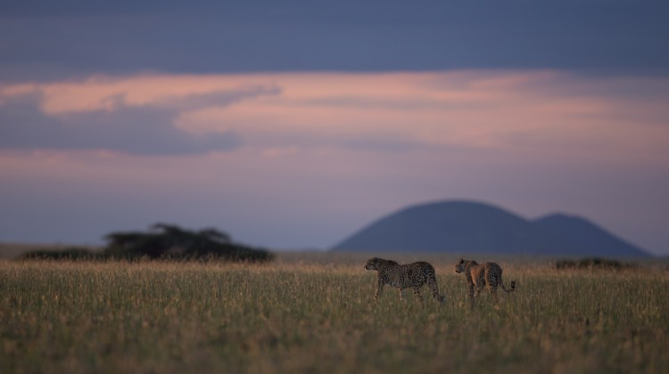 Safari Pioneers – Exclusive Kenyan safari