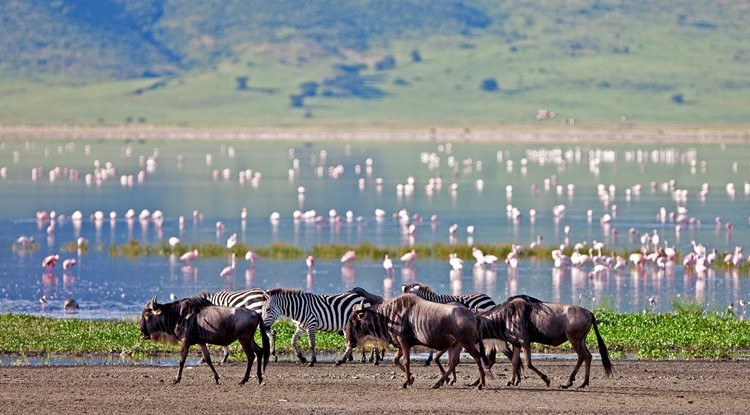 5 African Wildlife Migrations