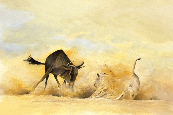 simon_stevenson_art_wildebeest_lion_tea_oche watercolour painting