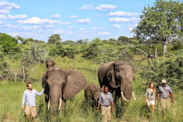 Abu-camp-elephant-guests-walking-safari-Andrew-Howard-600-400
