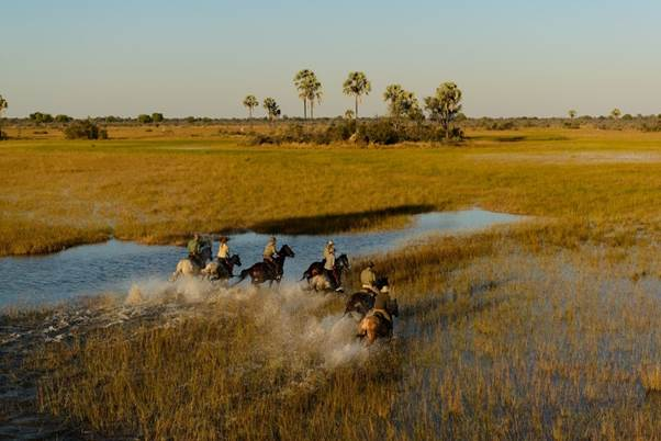 African Horseback Safaris riding in v shape in the Okavango Delta Botswana