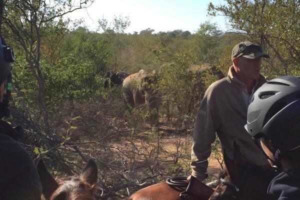 IMG_1313 Wait A Little Guide Philip Elephants Wait A Little SA