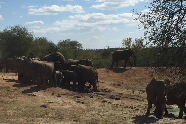 IMG_1444 Elephants Wait A Little SA 600 400